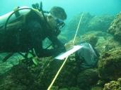 Netrani Island survey for CMFRI